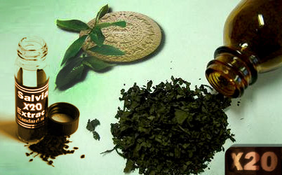 Buy Salvia From Us: Here's Why