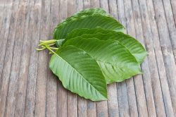 Kratom remains legal